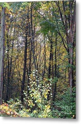 October Woods Metal Print by Melissa Stoudt