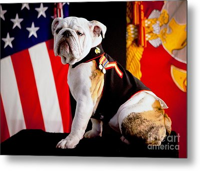 Official Mascot Of The Marine Corps Metal Print