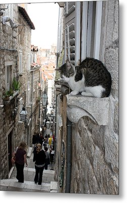 Old Town Alley Cat Metal Print by David Nicholls