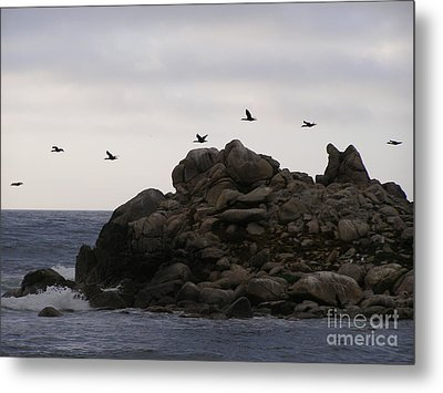 On A Mission Metal Print by Bev Conover