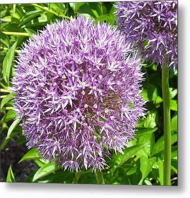 Metal Print featuring the photograph Onions Anyone by Kristine Bogdanovich