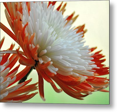 Orange And White Flower Metal Print