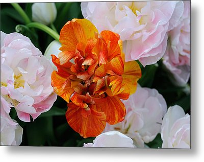Metal Print featuring the photograph Orange Flower by Haleh Mahbod