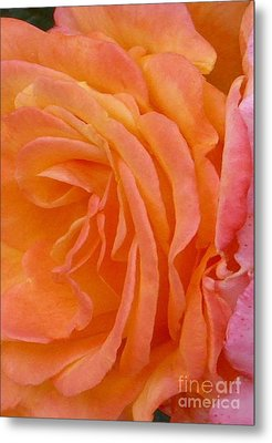 Orange Rose Swirl Metal Print