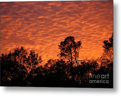 Orange Sunset Metal Print by D Wallace