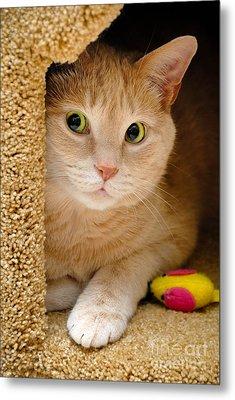 Orange Tabby Cat In Cat Condo Metal Print