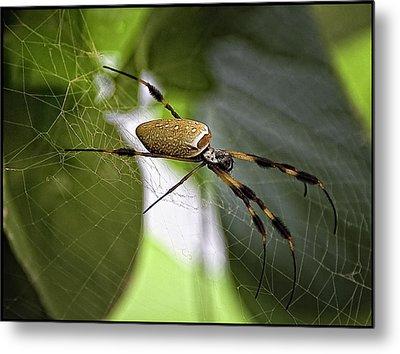 Orb Spider 2 Metal Print by Lynn Andrews