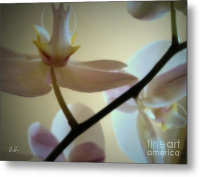 Orchid Composition Metal Print by Geri Glavis