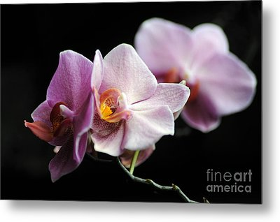Metal Print featuring the photograph Orchid by Randi Grace Nilsberg