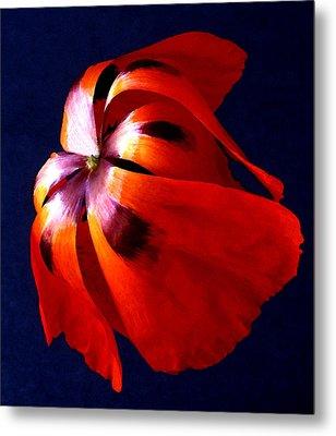 Oriental Poppy I Metal Print