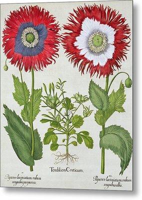 Ornamental Poppies, From The Hortus Metal Print by German School