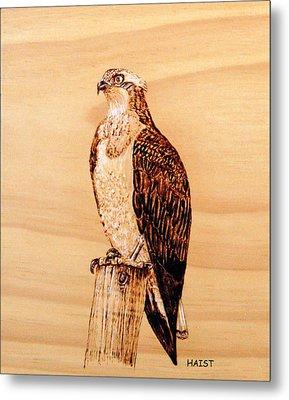 Osprey Metal Print by Ron Haist