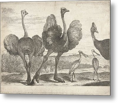 Ostriches, Cassowary And Spoonbill, Peeter Boel Metal Print by Peeter Boel