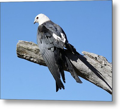 Out On A Limb Metal Print by Paulette Thomas