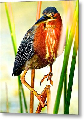 Out On A Reed Metal Print by AnnaJo Vahle