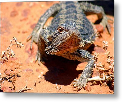 Metal Print featuring the photograph Outback Lizard 2 by Henry Kowalski