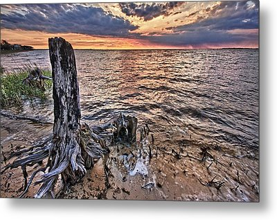 Oyster Bay Stump Sunset Metal Print