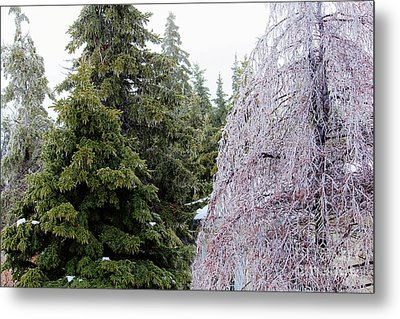 Painted With The Same Brush - Ice Storm Metal Print by Barbara Griffin