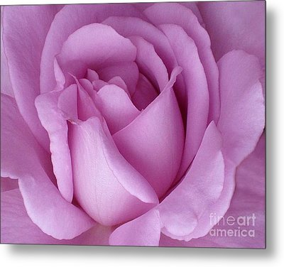 Pale Magenta Rose Metal Print