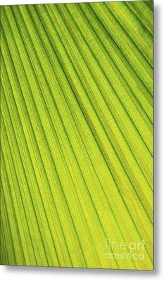 Palm Tree Leaf Abstract Metal Print by Elena Elisseeva