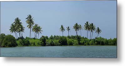 Palm Trees On Small Island Along Coast Metal Print by Panoramic Images