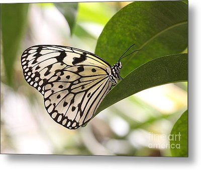 Metal Print featuring the photograph Paper Kite On A Leaf by Ruth Jolly