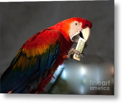 Metal Print featuring the photograph Parrot Eating 1 Dollar Bank Note by Gunter Nezhoda