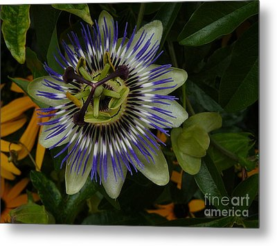 Metal Print featuring the photograph Passion Flower by Jane Ford