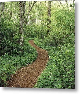 Path Through Woods Metal Print by Bert Klassen