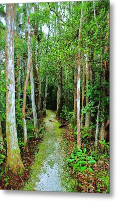 Pathway To The Rainforest Metal Print by Kicking Bear  Productions