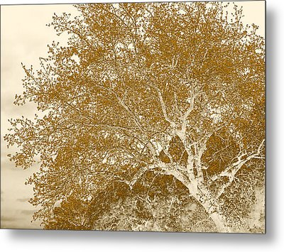 Patience Metal Print by Wendy J St Christopher