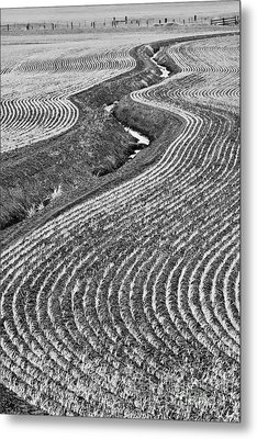 Patterns 1 Metal Print by Don Hall