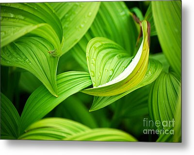 Metal Print featuring the photograph Peaceful Green by Cynthia Lagoudakis