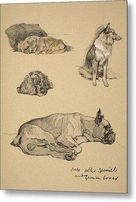 Peke, Collie, Spaniel And German Boxer Metal Print by Cecil Charles Windsor Aldin