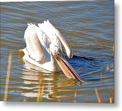 Metal Print featuring the photograph Pelican Fishing by Lula Adams
