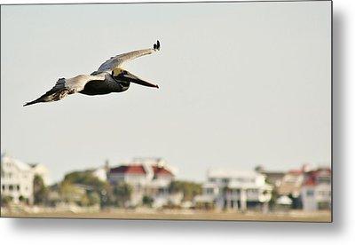 Pelican Flying Over Murrells Inlet Metal Print by Paulette Thomas
