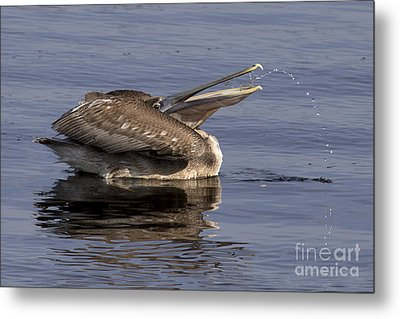 Pelican Fountain  Metal Print