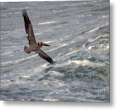 Metal Print featuring the photograph Pelican Glide by Dale Nelson