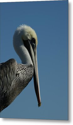 Pelican Profile 2 Metal Print