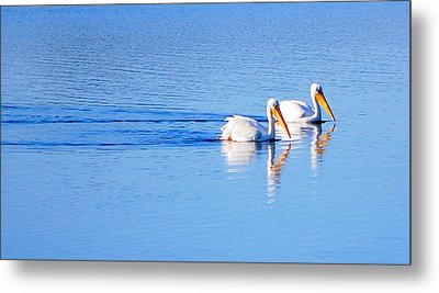 Metal Print featuring the photograph Pelicans On The Bay by AJ  Schibig