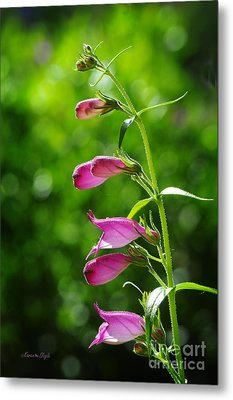 Metal Print featuring the photograph Penstemon by Karen Slagle