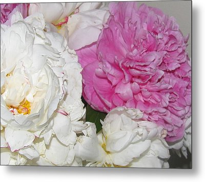 Metal Print featuring the photograph Peonies 11 by Margaret Newcomb