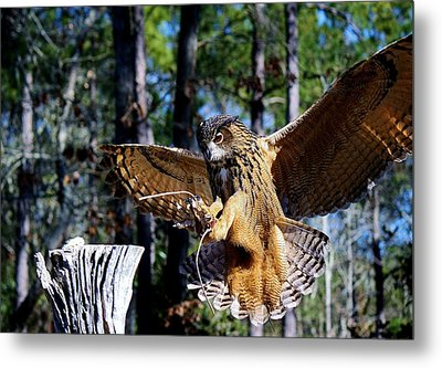 Perfect Landing Metal Print by Paulette Thomas