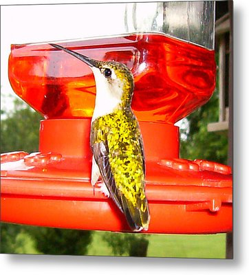 Metal Print featuring the photograph Perfect Pose by Nick Kirby