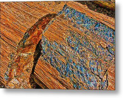 Petrified Forest Logs Metal Print by Bob and Nadine Johnston