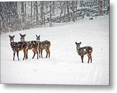 Picture Perfect Deer Metal Print