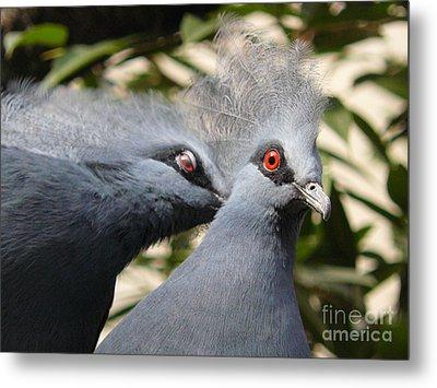 Pigeons Metal Print by Jane Ford