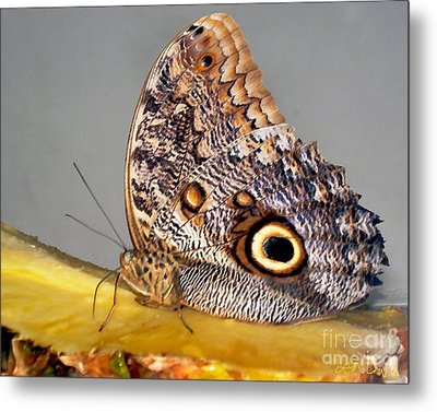 Pineapple Butterfly Metal Print by Leslie Cruz
