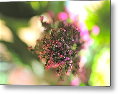 Pink Blossom Metal Print by Tracy Male