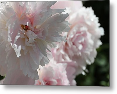 Pink Confection Metal Print